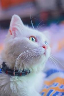 Kot z dziwnym okiem