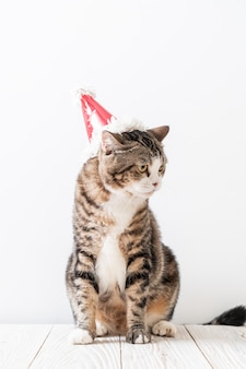 Kot z kapeluszem imprezowym