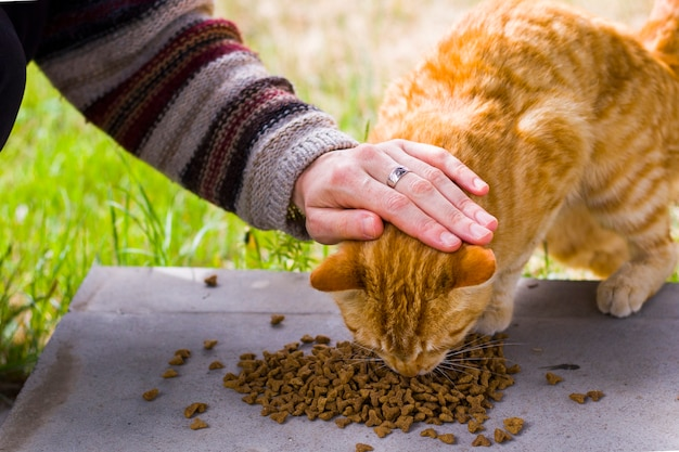 Kot z karmą dla kotów, proces jedzenia, kot rudy
