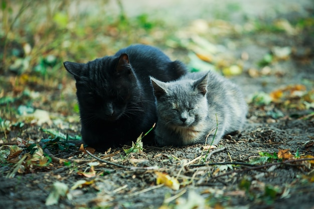 Kot z kotkiem siedzi na opadłych liściach.