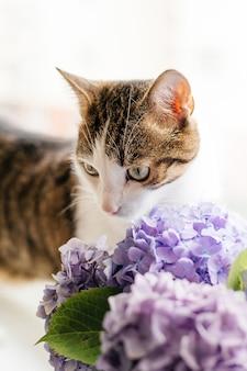 Kot z kwitnącą rośliną hortensji. kotek wąchający bukiet w doniczce w pokoju, życie domowe