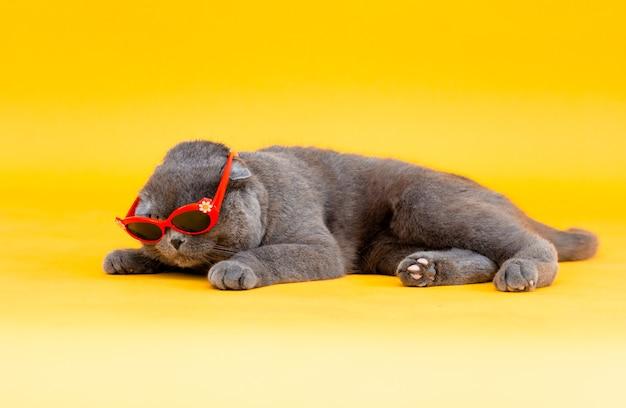 Kot z uszami scottish fold w okularach przeciwsłonecznych leży na żółtym tle. zdjęcie studyjne.
