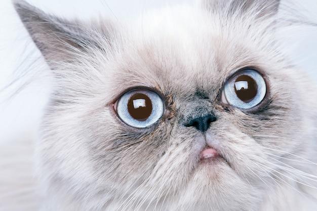 Kot z zrzędliwym pyskiem