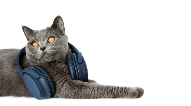Kot ze słuchawkami na białym tle