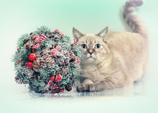 Kot ze świąteczną dekoracją całująca konar