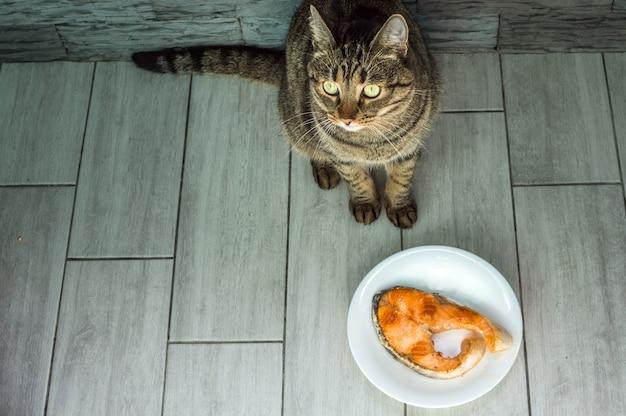 Kot zje smażonego pstrąga rybnego z talerza