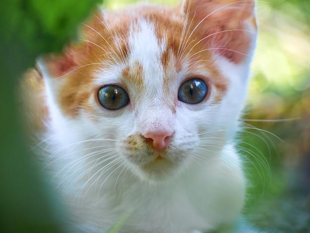 Kotek bawić się w ogrodzie.
