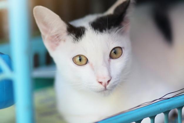 Kotek biały kot siedzi i cieszyć się na niebieski kosz z działaniem promieni słonecznych