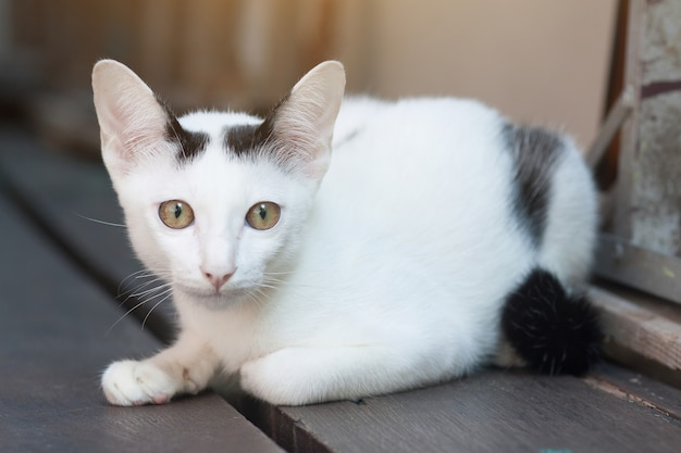 Kotek biały kot siedzi i cieszyć się na tarasie z drewna z promieni słonecznych