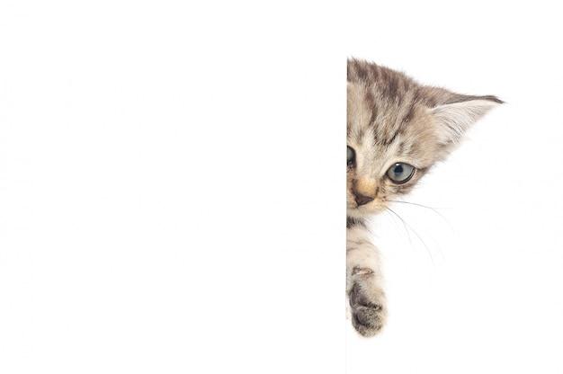 Kotek częściowo się ukrywa