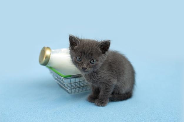 Kotek i butelka mleka. szary kot z jedzeniem w koszyku.