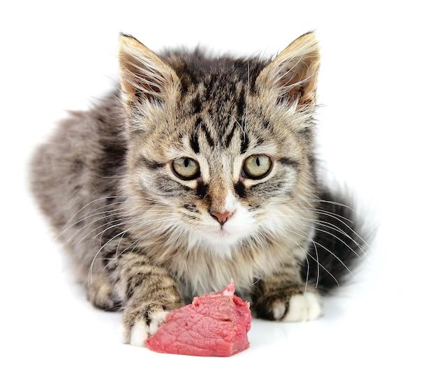 Kotek jedzenie świeżego mięsa na białym