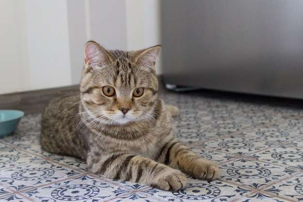 Kotek leży na podłodze, koncepcja cute cat