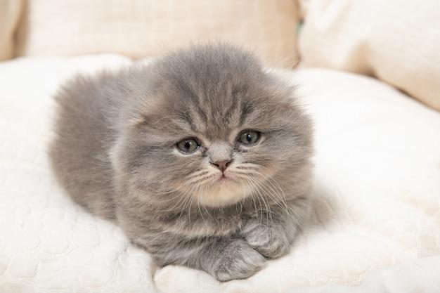 Kotek leży w łóżku dla kotów.