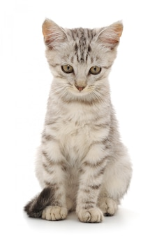 Kotek na białym tle