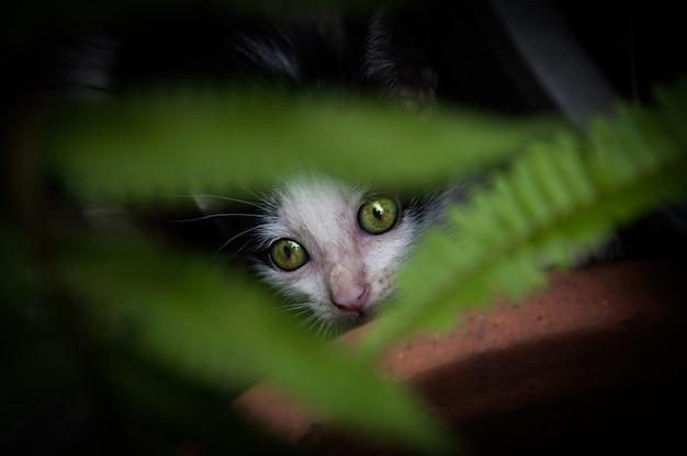 Kotek o pięknych zielonych oczach, portret zwierzęcy, figlarny kot relaksujący wakacje