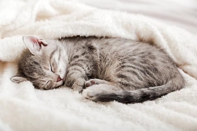 Kotek pręgowany śpi zwinięty w kłębek na białym miękkim kocu