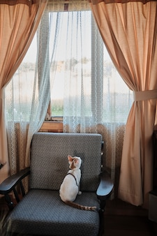 Kotek siedzi na kanapie i wygląda przez okno. tradycyjny klasyczny dom w stylu vintage. zostań w domu