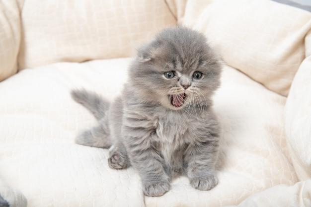 Kotek siedzi na łóżku dla kotów i ziewa.