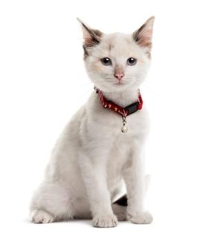 Kotek siedzi przed białą ścianą
