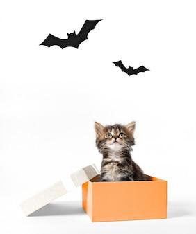 Kotek siedzi w pomarańczowym pudełku i patrzy na nietoperze.
