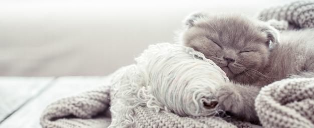 Kotek śpi na swetrze