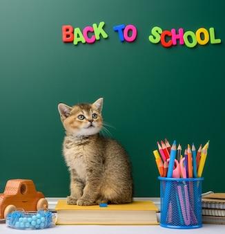 Kotek szynszyla brytyjska złoty tyknięty prosto siedzi z przodu, tło zielonej tablicy kredowej i papeterii, powrót do szkoły