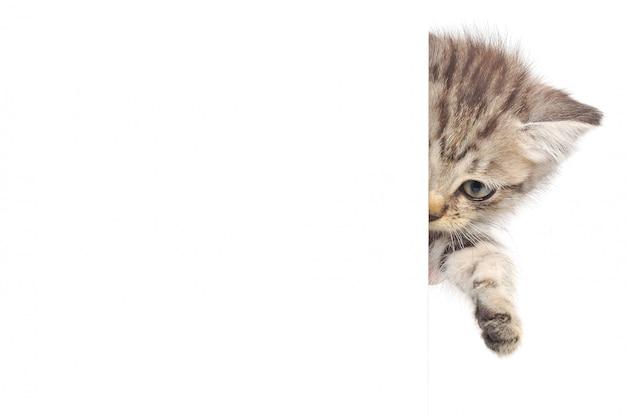 Kotek ukrywa się za ścianą