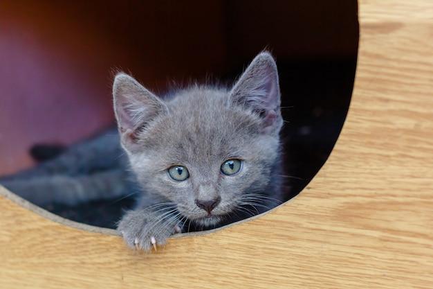 Kotek w domu dla kotów