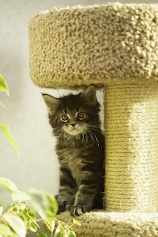 Kotek w kompleksie gier dla kotów. domek dla kota z drapakiem