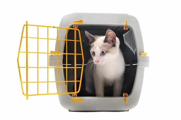 Kotek w nosidełku dla zwierząt