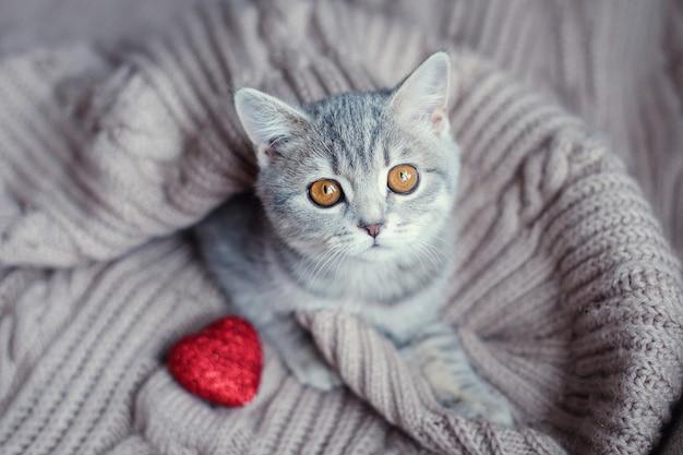 Kotek z sercem na walentynki