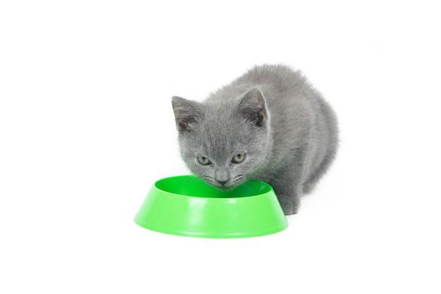 Kotek zjada jedzenie z miski