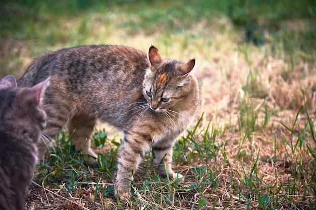 Koty bawią się na trawie w ogrodzie
