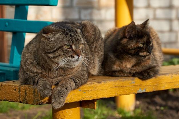 Koty domowe leżą na ławce na dziedzińcu domu i wygrzewają się w wieczornym słońcu.