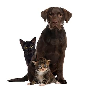 Koty i pies siedzi