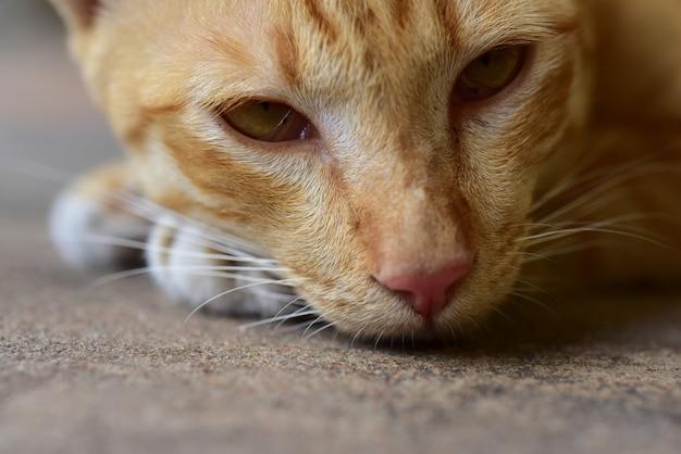 Koty ładny mały psotny kot wyleguje się i odpręża. ziemia dookoła domu