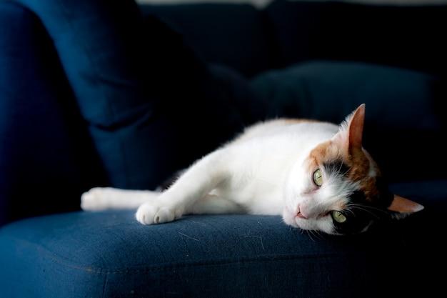 Koty leżą na niebieskiej kanapie i gapią się na mój aparat.