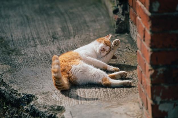 Koty myją ciało.