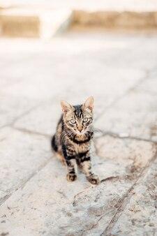 Koty na starówce budva kotor dubrownik chorwacja i mon