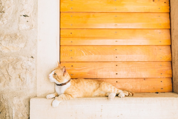 Koty na starym mieście budva kotor dubrownik chorwacja i mon