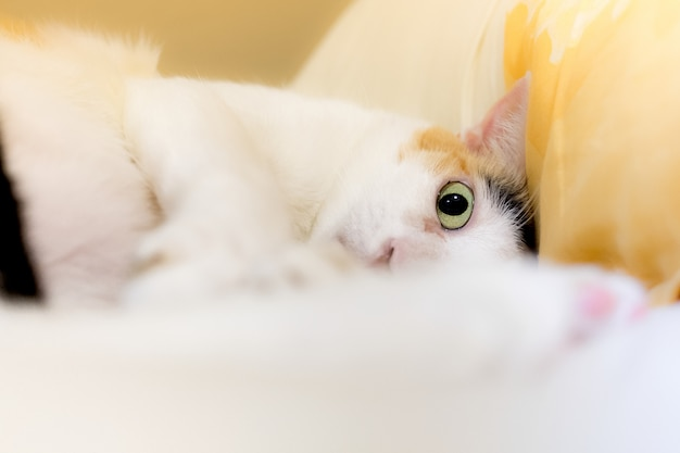 Koty patrzą w kamerę przez panikę.