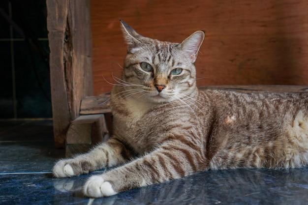 Koty zastanawiają się, co czeka i wyglądają uroczo.