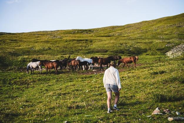 Kowboj idzie w kierunku pięknych koni na zielonym, trawiastym zboczu góry. stableman z stadem koni na zielonej alpejskiej łące w świetle słonecznym. brązowe i białe cudowne konie pasą się na zboczu góry.
