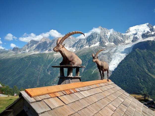 Kozioł na dachu domu przed górami