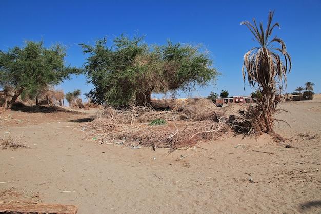 Kozy w małej wiosce nad nilem, sudan