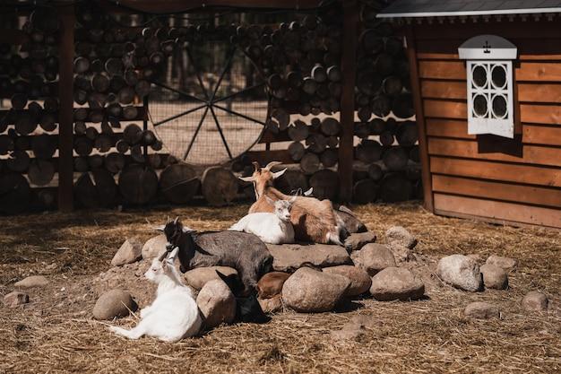 Kozy w pięknej klatce plenerowej na ulicy przy słonecznej pogodzie