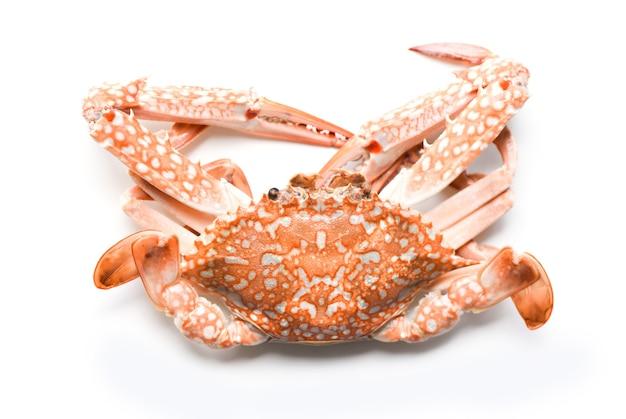 Krab na białym tle - owoce morza skorupiaki gotowane na parze niebieski krab pływacki
