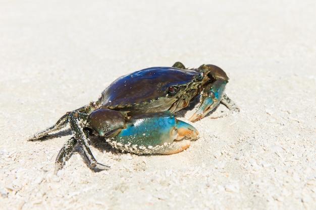 Krab na piasku