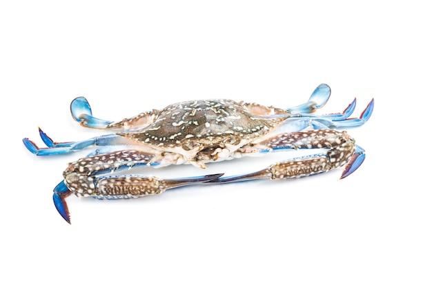 Krab niebieski na białym tle